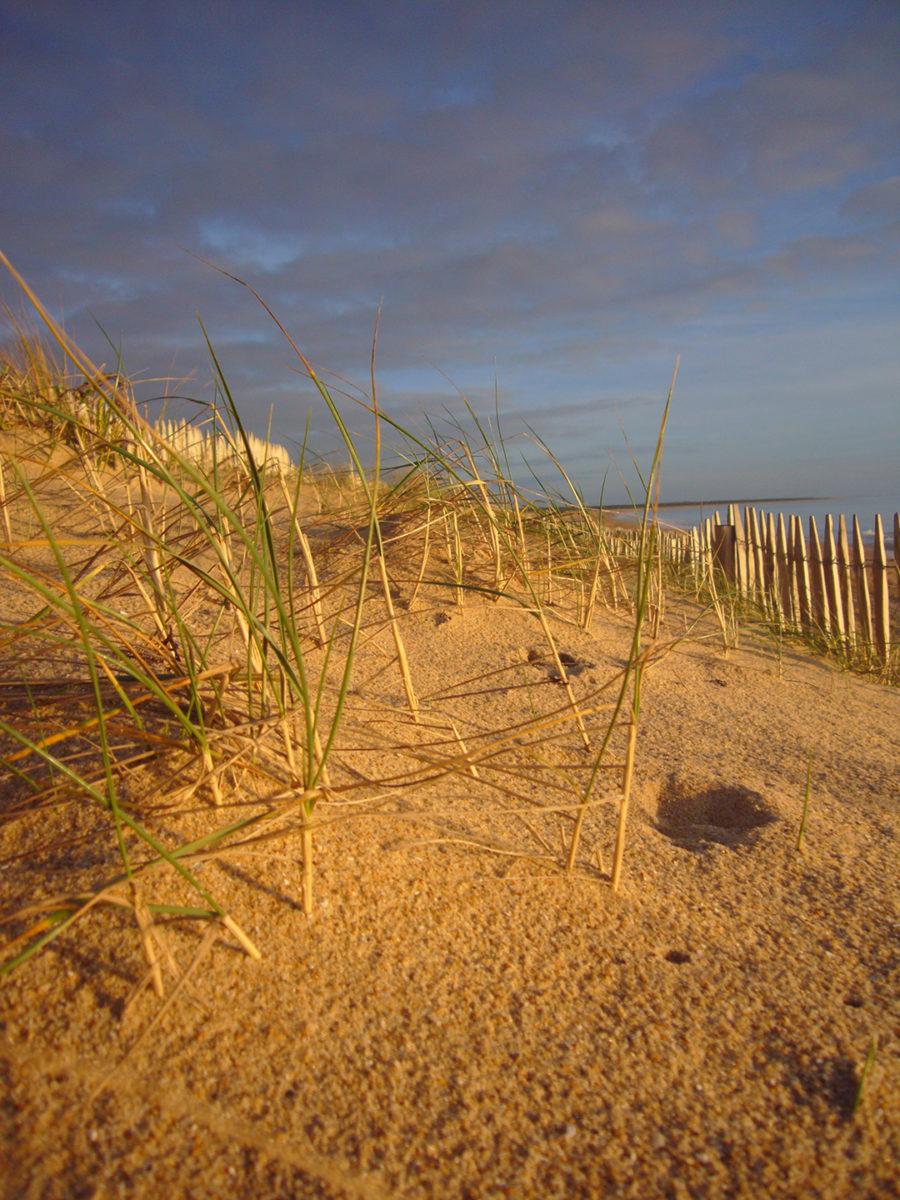 Dunes et plages du marais maritime