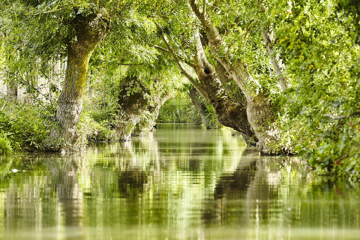 Marais poitevin, un parc naturel régional d'exception