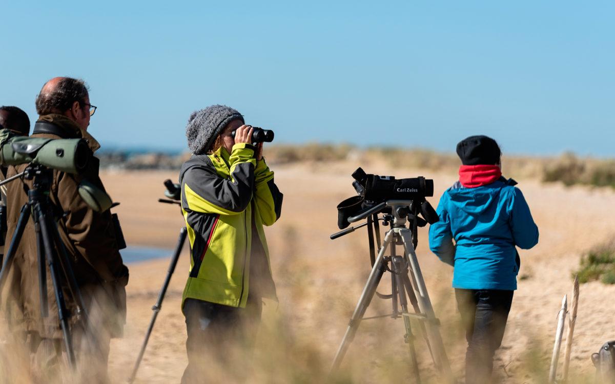 Ornithologie au camp de migration à la Pointe de l'Aiguillon