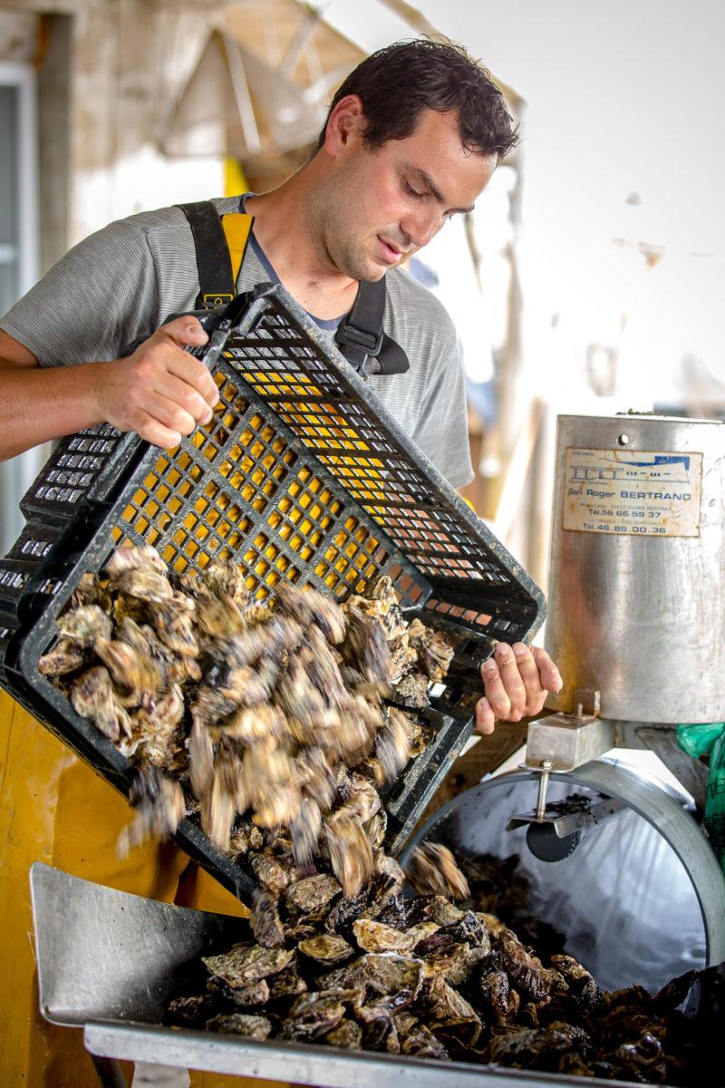 huitre saveurs mer vendee atlantique laiguillon ostreiculteur