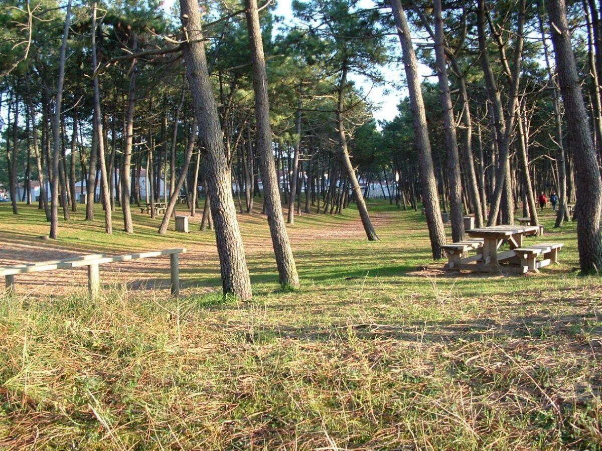 Picknick im Pinienwald von La Faute-sur-Mer