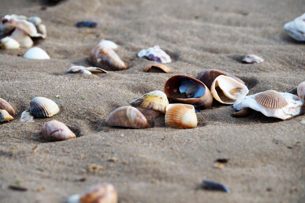 Sur la plage abandonnée, coquillages et...